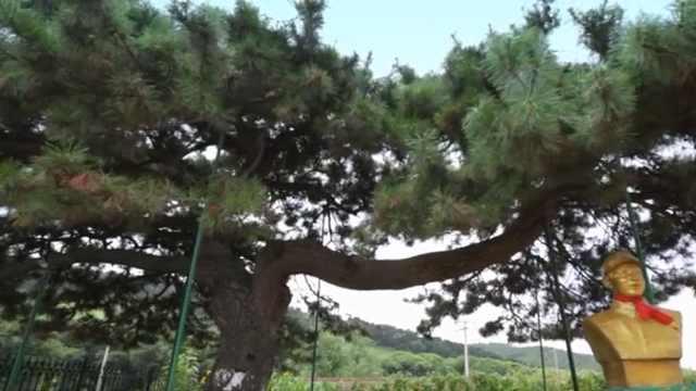 《走进雷锋》㉘ 雷锋树下