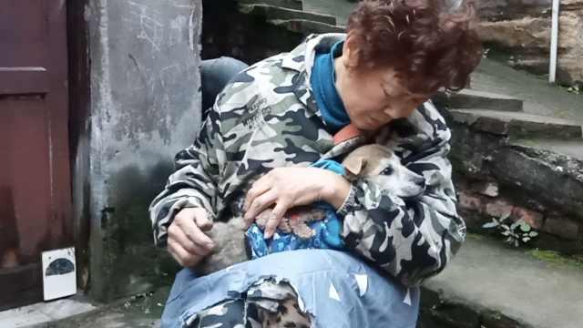 老太救流浪猫狗20年,大2女生接力
