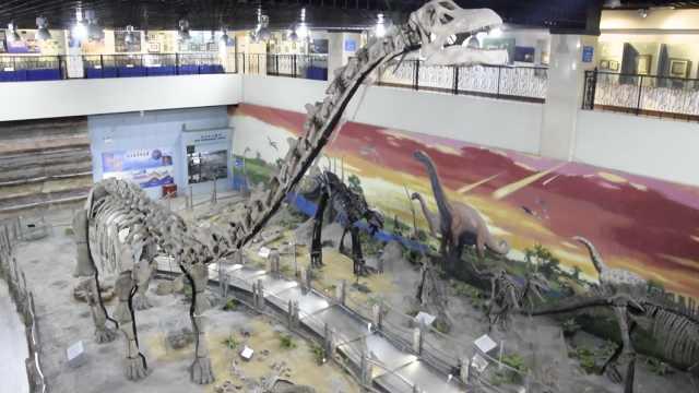 寶藏高校!20米恐龍化石1年引客50萬