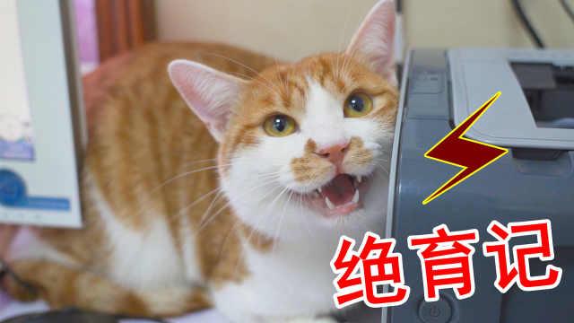 橘猫被带去绝育,一路惨叫到医院