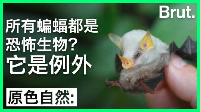 所有蝙蝠都是恐怖生物?它是例外