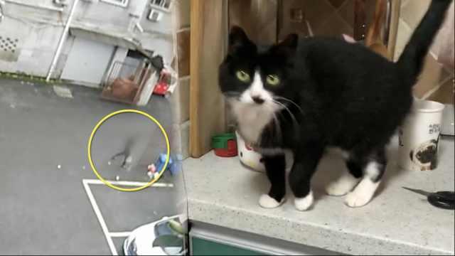 神探!民警通过一只猫,抓获外省逃犯