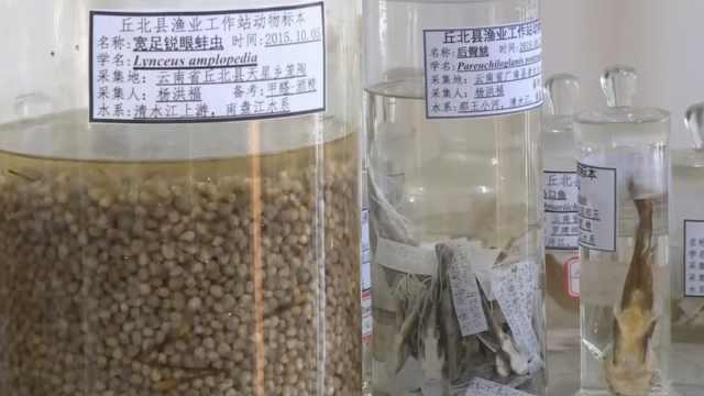云南现水生新物种,进化生活3.6亿年