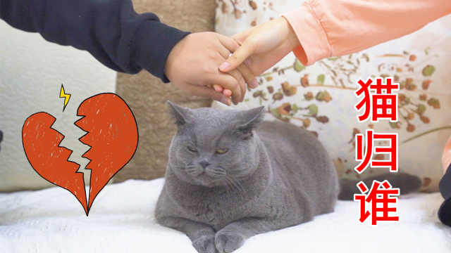 假如情侣分手,一起养的猫应归谁?