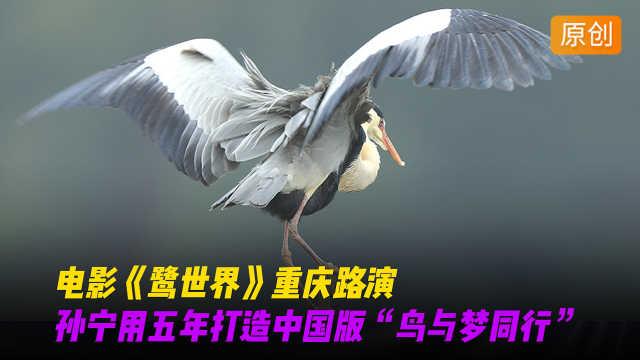 """孙宁用五年打造""""鸟与梦同行"""""""