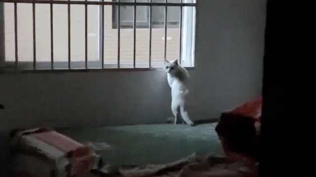 她缴租后中介跑路,房东拆窗户赶人