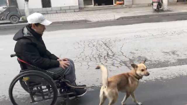 男子瘫痪,爱犬每天拉他遛弯9公里