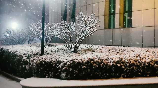 终于来啦!平顶山2020年的第一场雪