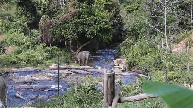 世界地球日丨实地探访全球首家高福利大象营:真爱大象就别骑