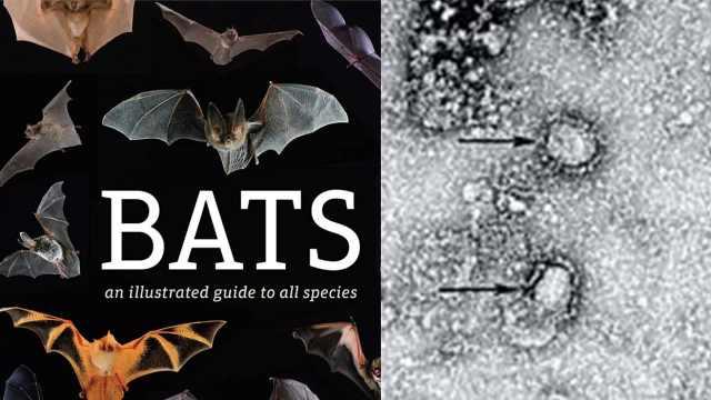 生物学专家详解为何不该妖魔化蝙蝠