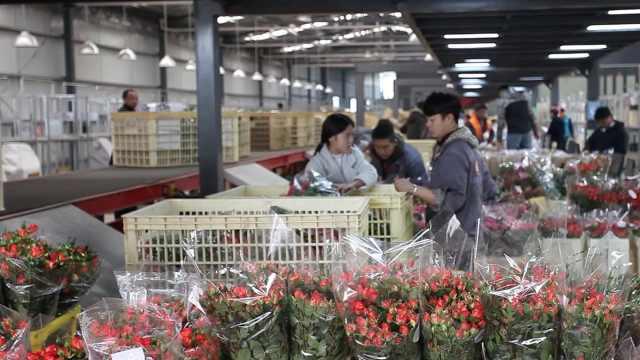 最大鲜花市场:玫瑰价格仅去年1/3