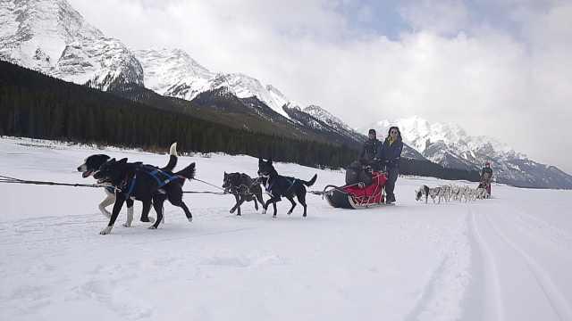 铁叔在艾伯塔斯普雷湖体验狗拉雪橇