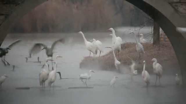 10万鸟类聚春日湿地,迎空展翅翱翔