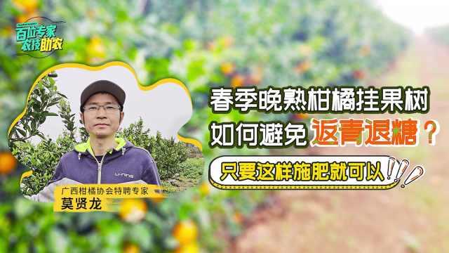 晚熟柑橘春季挂果树,如何避免返青退糖保质保产?