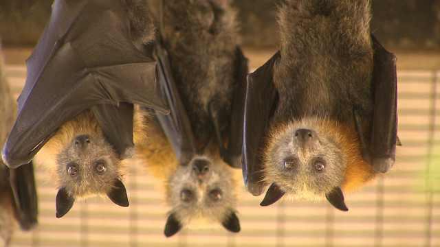 致命关系:只要人类捕杀野生动物,新冠疫情就会重演