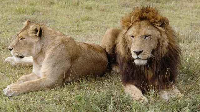 新发现:哺乳动物60%物种中,雌性的平均寿命比雄性长18.6%