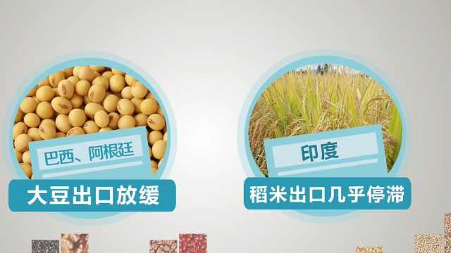 联合国预警粮食危机,多国开始抢购粮食!我们要不要囤粮?