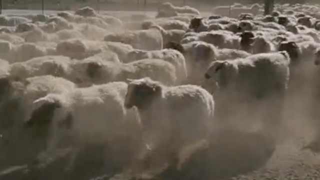 草原牧民骑摩托放羊:每天跑30公里去膻味,有GPS定位