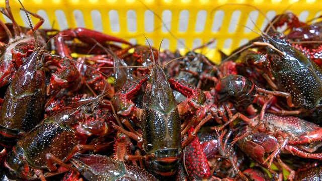 供需双降,小龙虾上市价格平稳,较去年略低5%左右