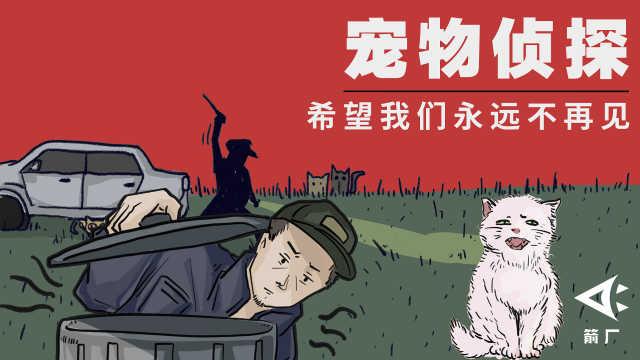 宠物侦探有多冷门?深夜找猫狗被当小偷,寻回宠物后主人痛哭