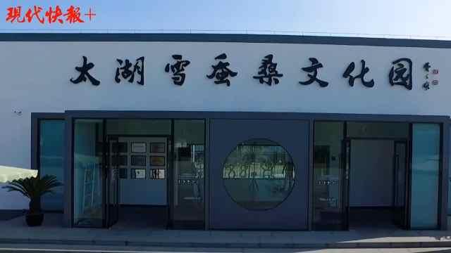 苏州太湖雪版权探索之路:将版权形成一个产业