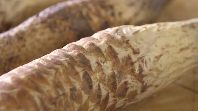 农民承包5000亩沙漠种下26万穴肉苁蓉,一斤卖出120