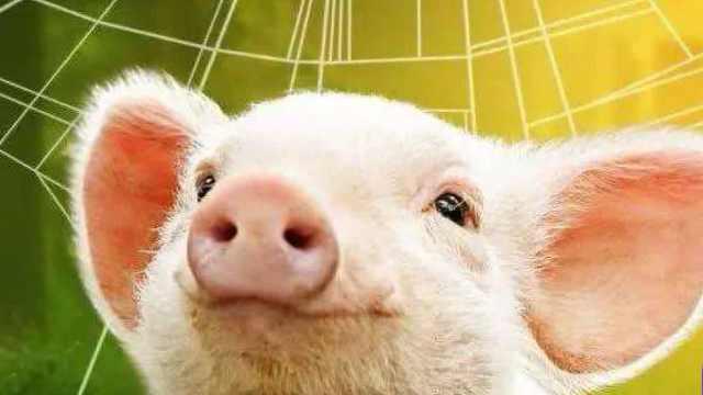 程序员转行养猪,竟然真香了!互联网大厂为何集体不务正业?