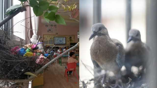 新朋友!幼儿园复课小鸟在窗台筑巢,萌娃纷纷给雏鸟起名