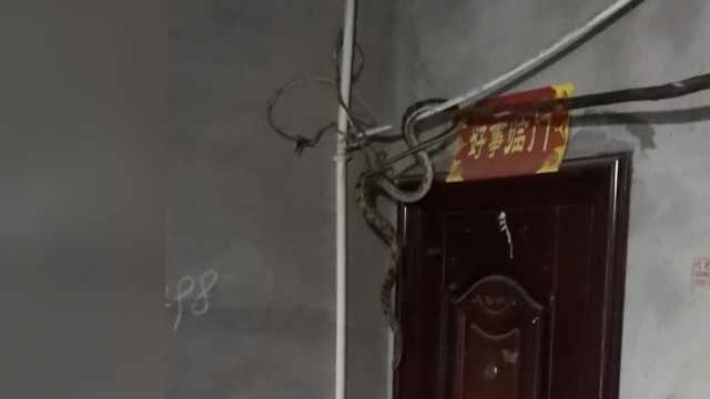 求心理阴影!老太下班回家,两米长蛇悬挂门顶瞪着她
