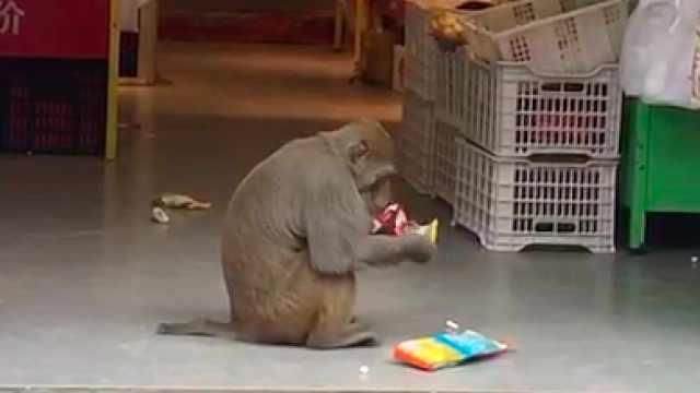 """""""美猴王""""下山大闹超市抢零食还打包带走:居民送香蕉被拒"""