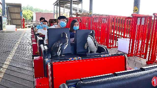 武汉欢乐谷惊现两只企鹅游客,饲养员:疫情期间憋久了