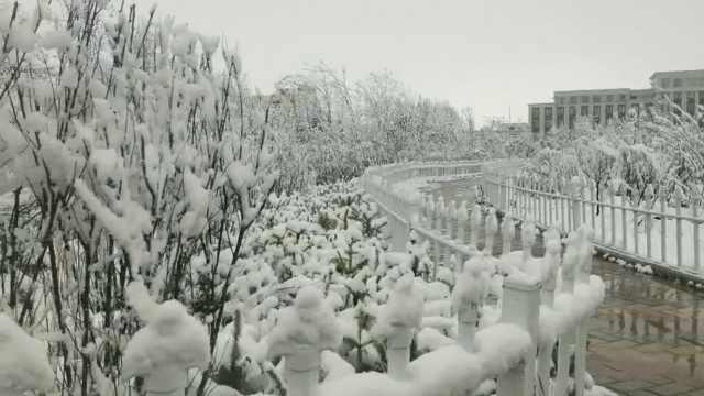 青海五月大雪市民短袖换棉衣:绿树鲜花被白雪覆盖