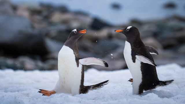 科学家发现地球上最干净的空气:在南极洲的南冰洋上空