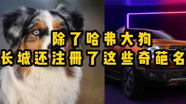 除了哈弗大狗,长城还注册了这些神奇的车名?