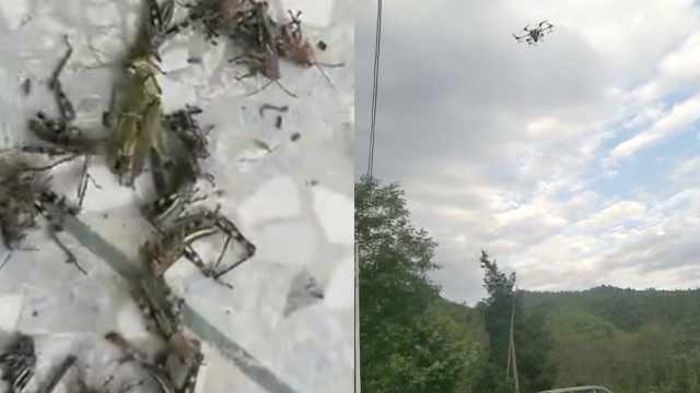 湖南永州大批蝗虫飞入河岸民居,当地出动无人机灭蝗