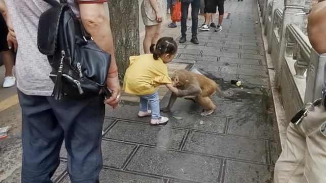 小女孩好心喂食,遭黔灵山泼猴抓住手咬一口