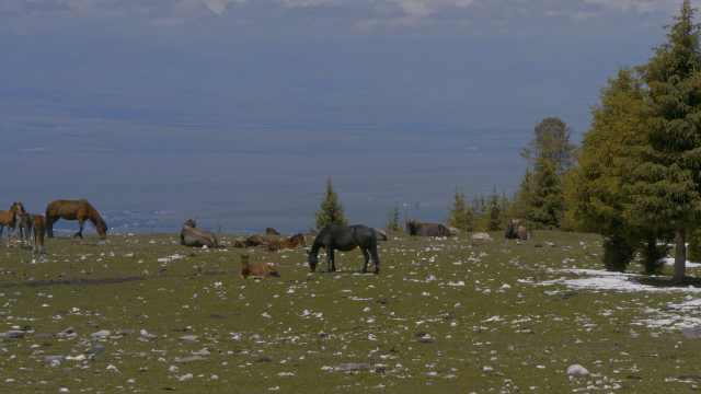 又是想去新疆的一天!航拍雪后百万亩草原:云