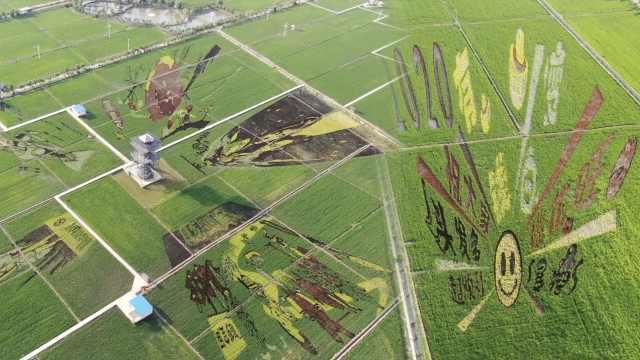 种出来的风景!稻田上GPS定位种出12幅画:憨豆哪吒紫霞仙子