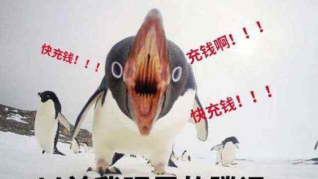 """当当网推出专题书单——""""不要再往鹅的伤口上抹老干妈了"""""""