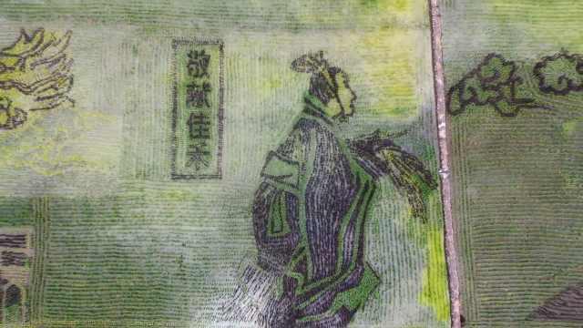 视觉盛宴!山西彩色水稻画巨幅稻田画,演绎唐