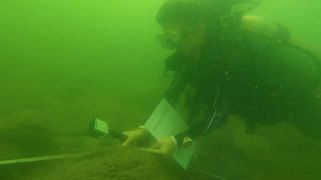 2020年广东珊瑚普查启动,科学家志愿者组团海底