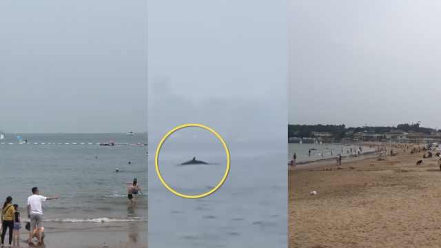 青岛三浴近海疑出现鲸鱼,浴场:已检查防鲨网,安全措施完备