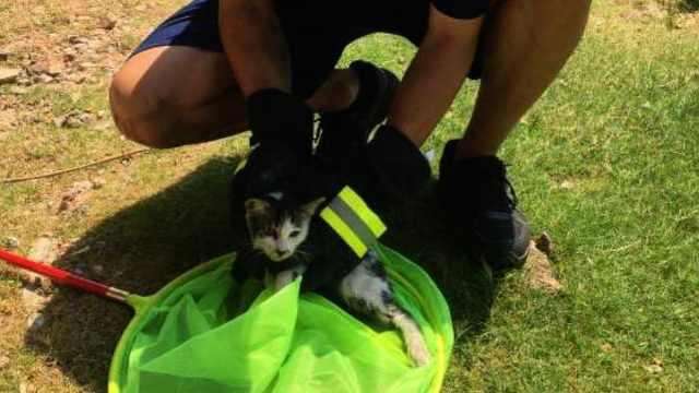 幼猫被困两个月获救,消防暖心为其寻找新家