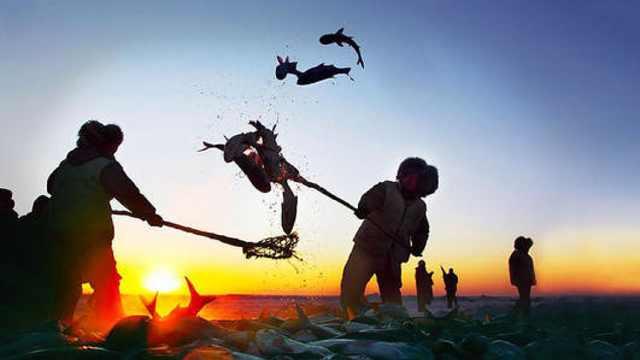 查干湖冬捕,冰天雪地里狂欢,捕鱼猎人的那些捕鱼细节