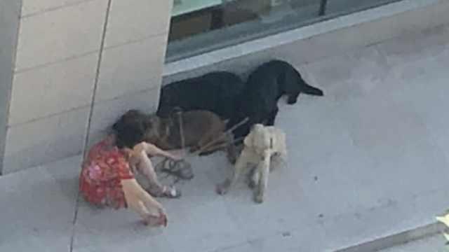 4条大狗跑上街咬伤多名路人,狗主人被警方带走