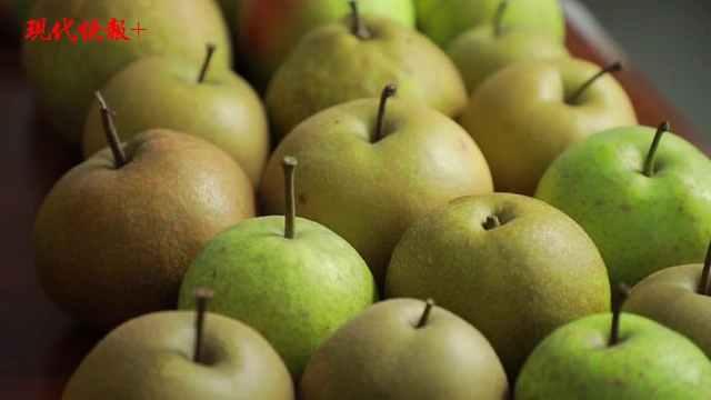 立秋品梨!200多种梨哪个最好吃,来看看这份大数据