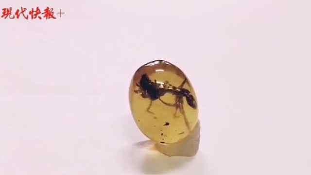 一亿年前的蚂蚁战斗力爆表