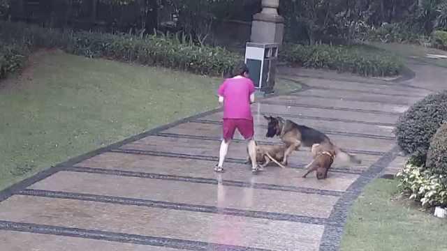 老人遛两小狗时遭大狗疯狂追咬,小区监控拍下惊险一幕