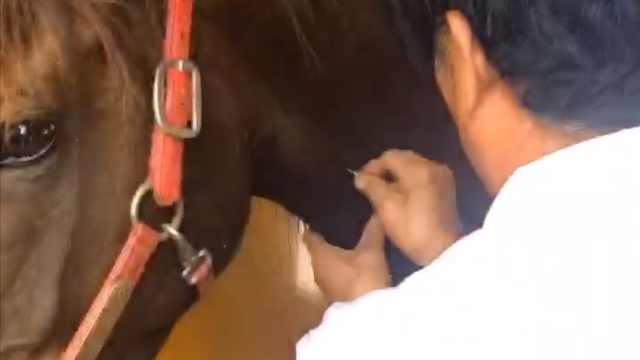 主人骑马冲进大海救出男孩:两匹马病危,或因海水浸泡感染