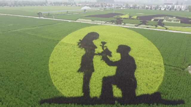 河南农民用GPS定位种400亩稻田画,袁隆平钟南山